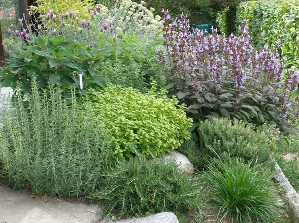 Piante da giardino pieno sole piante rampicanti da far for Piante in vaso pieno sole